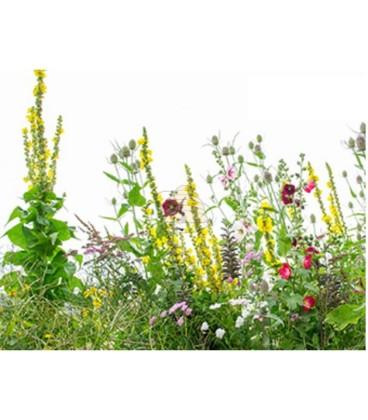 Meerjarig biologisch bloemenmengsel