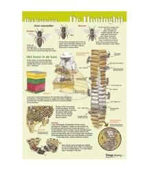 Het leven van de honingbij A4 kaart