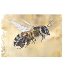 Ansichtkaart zijaanzicht honingbij bruin