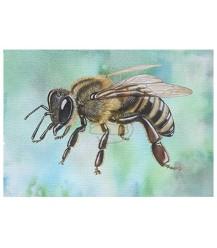 Ansichtkaart zijaanzicht honingbij blauw