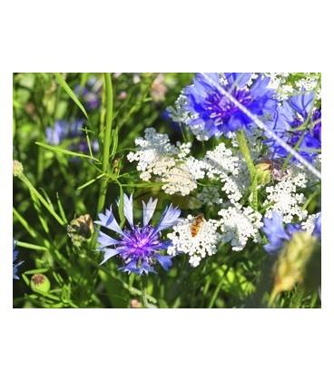 Imkershops Tübinger Biologisch bloemenzaad