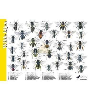 Wilde bijen 'zoekkaart' en honingbij