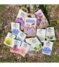 Bloembollen van drachtplanten