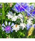 Bloemzaden van drachtplanten